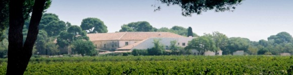 Achat vin languedoc domaine du mas neuf vignerons for Achat du neuf